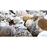Baker Ross Coquillages de grande taille décoratifs pour l'artisanat naturel pour les collages de bricolage et d'artisanat est