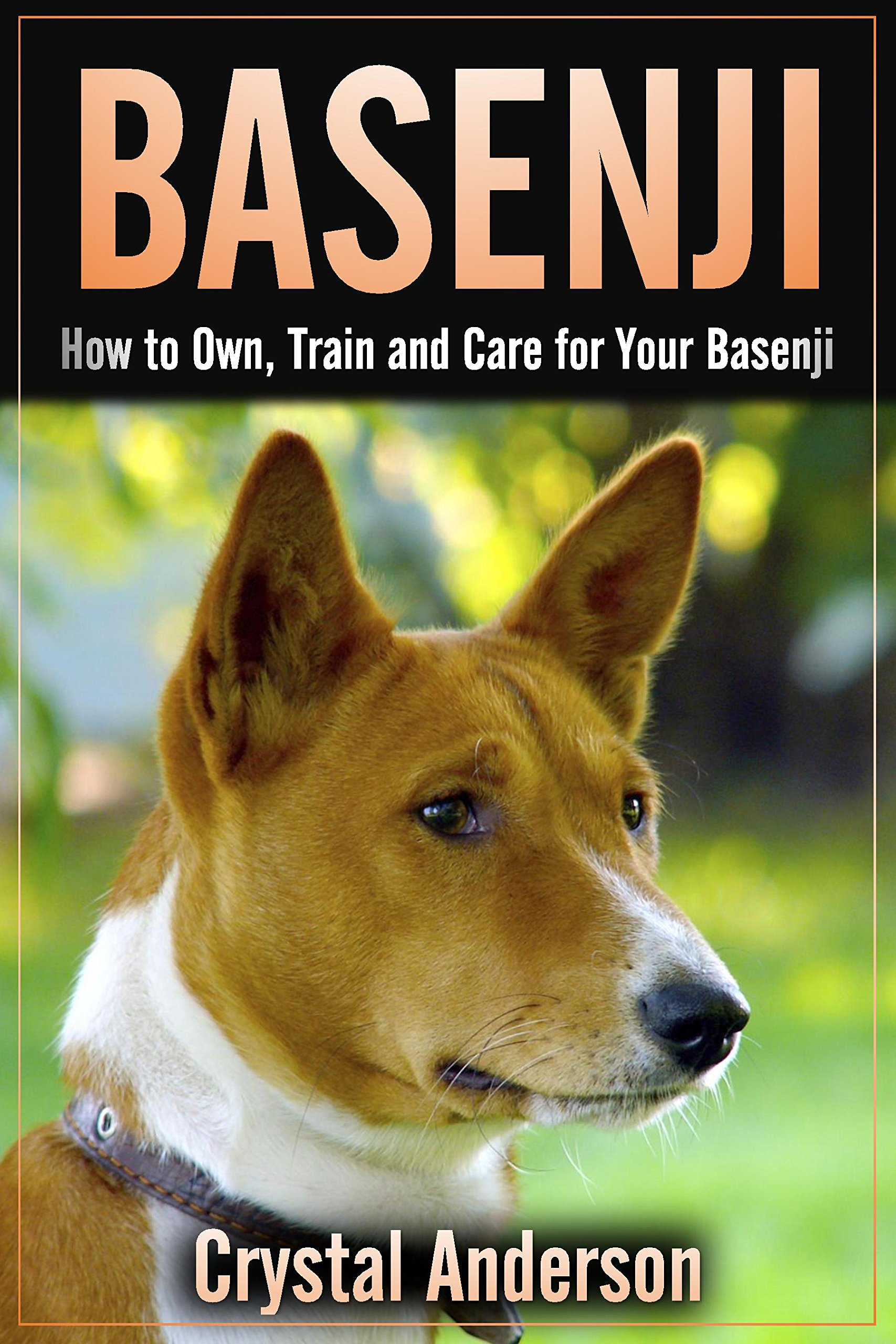 Basenji: How to Own, Train and Care for Your Basenji
