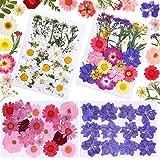 98 Pièces Ensemble de Fleurs Séchées Bricolage Fleurs de Marguerite Séchées Naturelles Fleurs Pressées Mixtes Plusieurs Fleur