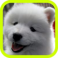 Cute Puppies!!! Adorable Puppy Pics and Wallpaper Pictures! Best Collection of FREE Pics with 3d Little Dogs in the World! A Great Pro Games App for Kids & Adults!
