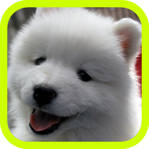 Cute Puppies!!! Adorable Puppy Pics and Wallpaper Pictures! Best Collection of FREE Pics with 3d Little Dogs in the World! A Great Pro Games App for Kids & Adults! (Video Game Sales)