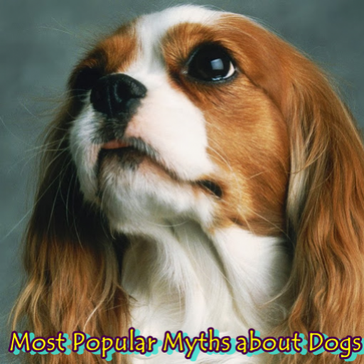 most-popular-myths-about-dogs
