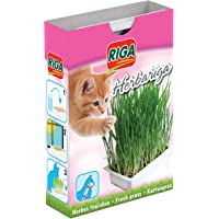 Riga Herbariga Herbe à Chat