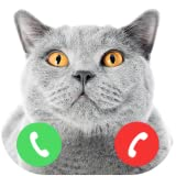 Fake Call From British Shorthair Cat Prank (no wifi)