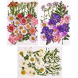 Xinzistar 105 pièces Ensemble de Fleurs séchées pressées naturelles pour bricolage Mélange fleurs séchées de DIY bougie peint