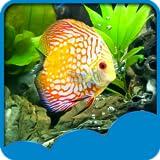 Aquarium Live Hintergrundbilder