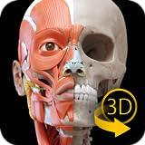 Muskelapparat - 3D Anatomie