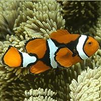 Marine Aquarium Fish 1