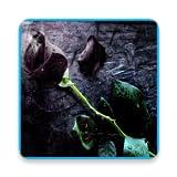 Black Rose 3D live Wallpaper