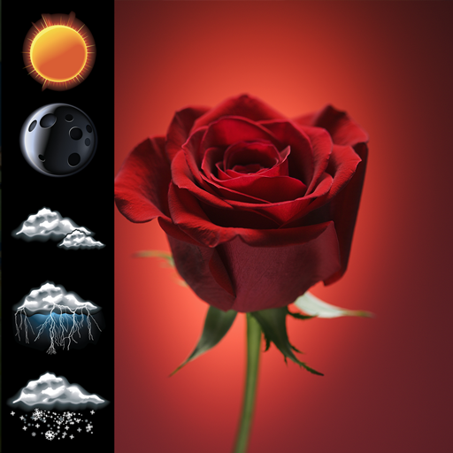 Uhr-Wetter-rote Rose