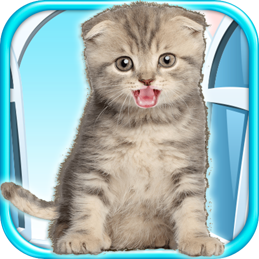 talking-kitten-play-time-fun-games-free