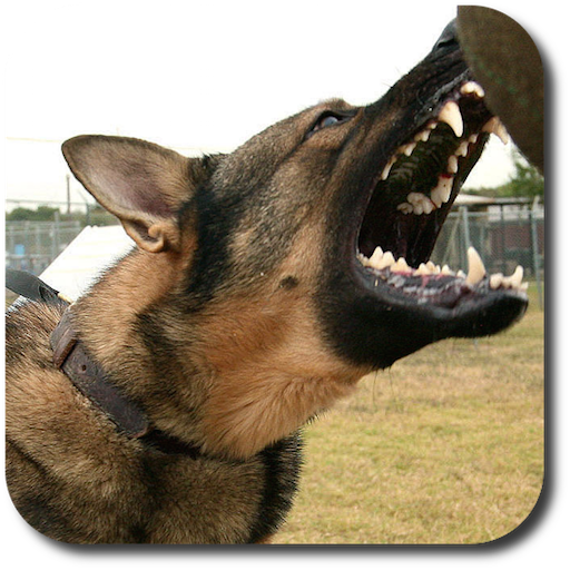 Dog Whistle High Pitched Dog Trainer -