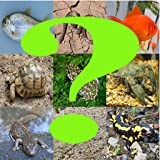 Adivina el reptil,anfibio o pez