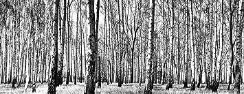 Fototapete schwarz weiß wald  Berlintapete - Wallpaper On Demand - Fototapete - Wald - Schwarz ...