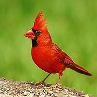 Uccello specie Trivia Quiz