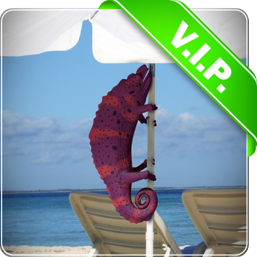 Chamäleon Leben Tapete Strand