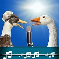 Vogel Sound Klingeltöne