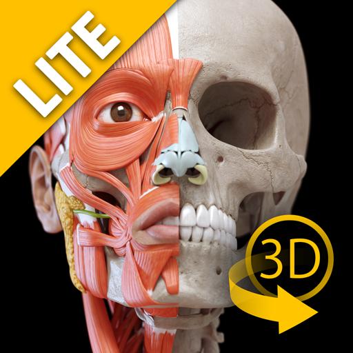 Muskelapparat -3D Anatomie - Lite -