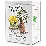 Cactus Starter Kit - Juego de cultivo de mini-invernadero, semillas de cactus y tierra - idea de regalo