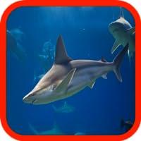 Hungry Aggressive Shark