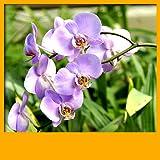 Hintergrundbilder von Orchid