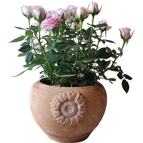 Vaso fioriera in terracotta per fiori, orchidee, piante grasse e aromatiche, peperoncino, cactus e bonsai, Diametro 18 H15 cm, Artigianale, per esterno, interno e decorare il tuo giardino ☘️