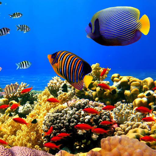 Jeu gratuit: Undersea