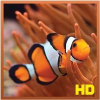 Stunning Clown Fish HD