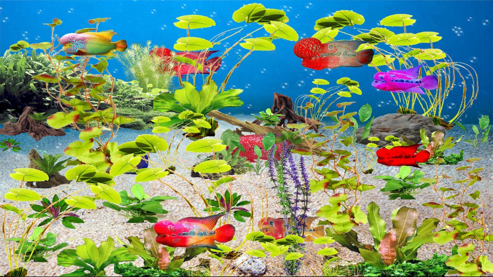 fleur-corne-aquarium-telechargement