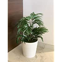 Fourwalls Beautiful Artificial Areca Palm Plant Without Vase (21 Leaves, 75 cm Tall, Green) (Green/White)