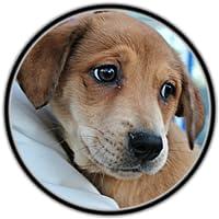 Animal Rescue Videos App