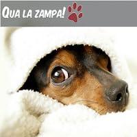 Qua la Zampa news