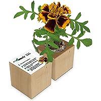 Eco-Woody   Regalo ecologico e sostenibile   Cubo di legno magnetico con semi di Tagete   Kit per la coltivazione facile…