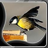 Sfondi Uccelli Live