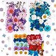 101 pièces Vraies Fleurs pressées séchées Fleurs séchées Naturelles Fleurs séchées à Ongles Multicolores pour résine, Scrapbo