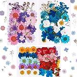 Xruison 101 st riktiga torkade pressade blommor naturliga torkade blommor flerfärgade naglar torra blommor för harts, scrapbo