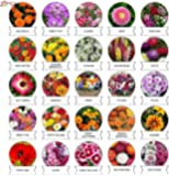 Kraft Seeds 25 Varieties of Flower Seeds Heirloom Seed For Your Garden 600+ seeds Beautiful Bloom This Season Genuine…