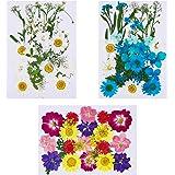 Xinzistar 101 Pièces Vraies Fleurs Séchées Pressées, Fleurs Séchées Naturelles Mixtes Feuilles Pétales pour Bricolage Bougie