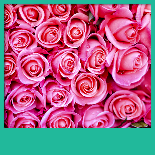 Rosa Roses Live