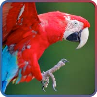 Cute Animal Jigsaw Puzzle for kids and toddlers - Beautiful and educational app for children