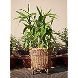 kraftinn Planter Pot Water Hyacinth and Cane (Natural Brown)