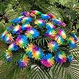 Ncient 20/50/100 Semillas de Margarita de Color Iris Bonsai de Jardín Semillas de Flores Plantas Raras para Balcón Interior y