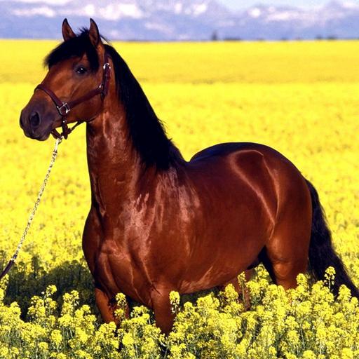 cavallo-super-velocita