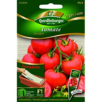 Solanum lycopersicon QLB Premium Saatgut Tomaten Tomaten Stab Harzglut
