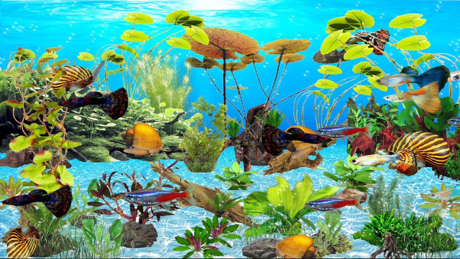 guppys-aquarium-deluxe-telechargement