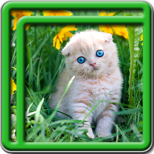 Kitty Live Wallpapers -