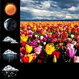 Widget meteo Campo di fiori