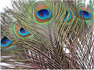 Peacock Feathers Real mor pankh Original Natural Premium Quality (12-15Inch)