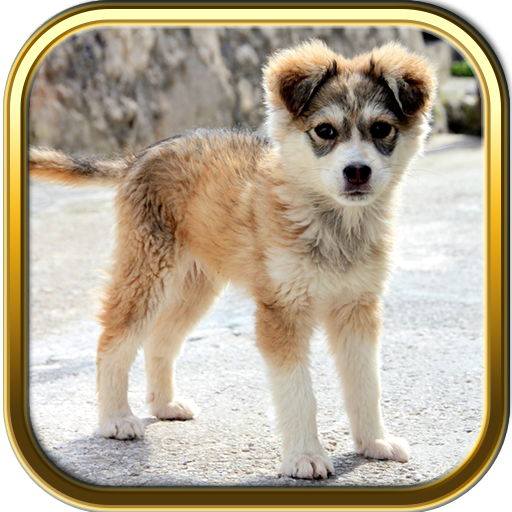 puzzle-pack-more-cute-puppies-puzzle-games