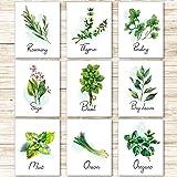 9 Stampe di Erbe d'Arte da Parete da Cucina Stampa Poster di Erbe Botanica Stampe d'Arte Verde di Pianta Floreale per Decoraz